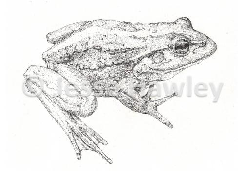 Frog October 7 2014 COMPRESSED.jpg