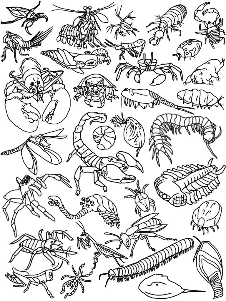 Arthropod Art (Line Art)