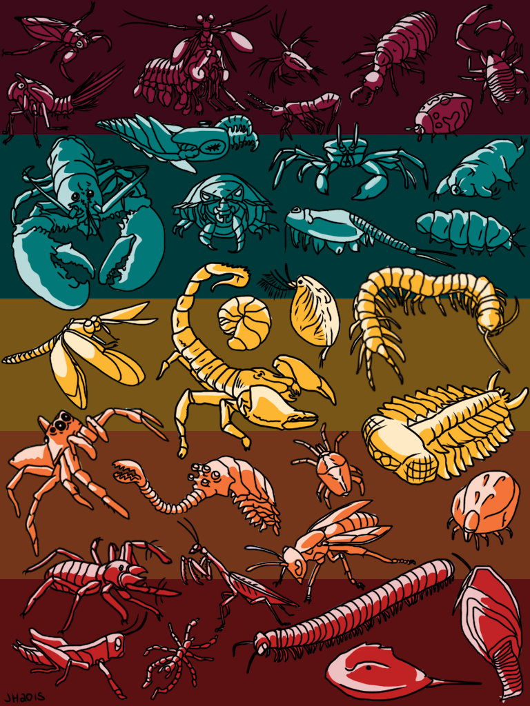 Arthropod Art (Colour)