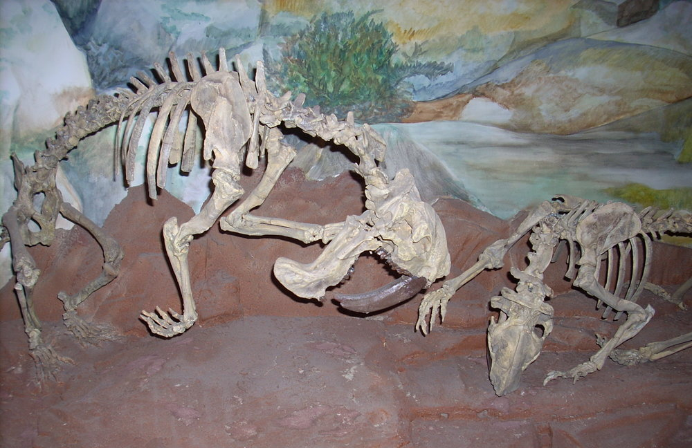 """Museo Paleontológico Egidio Feruglio"". Wikicommons."
