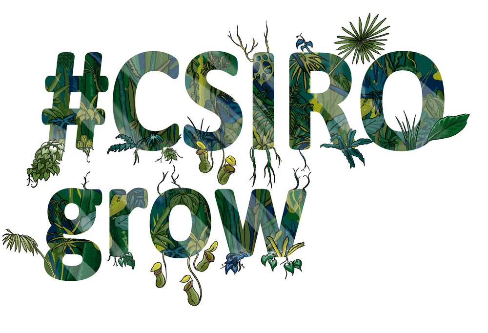 CSIRO grows.png