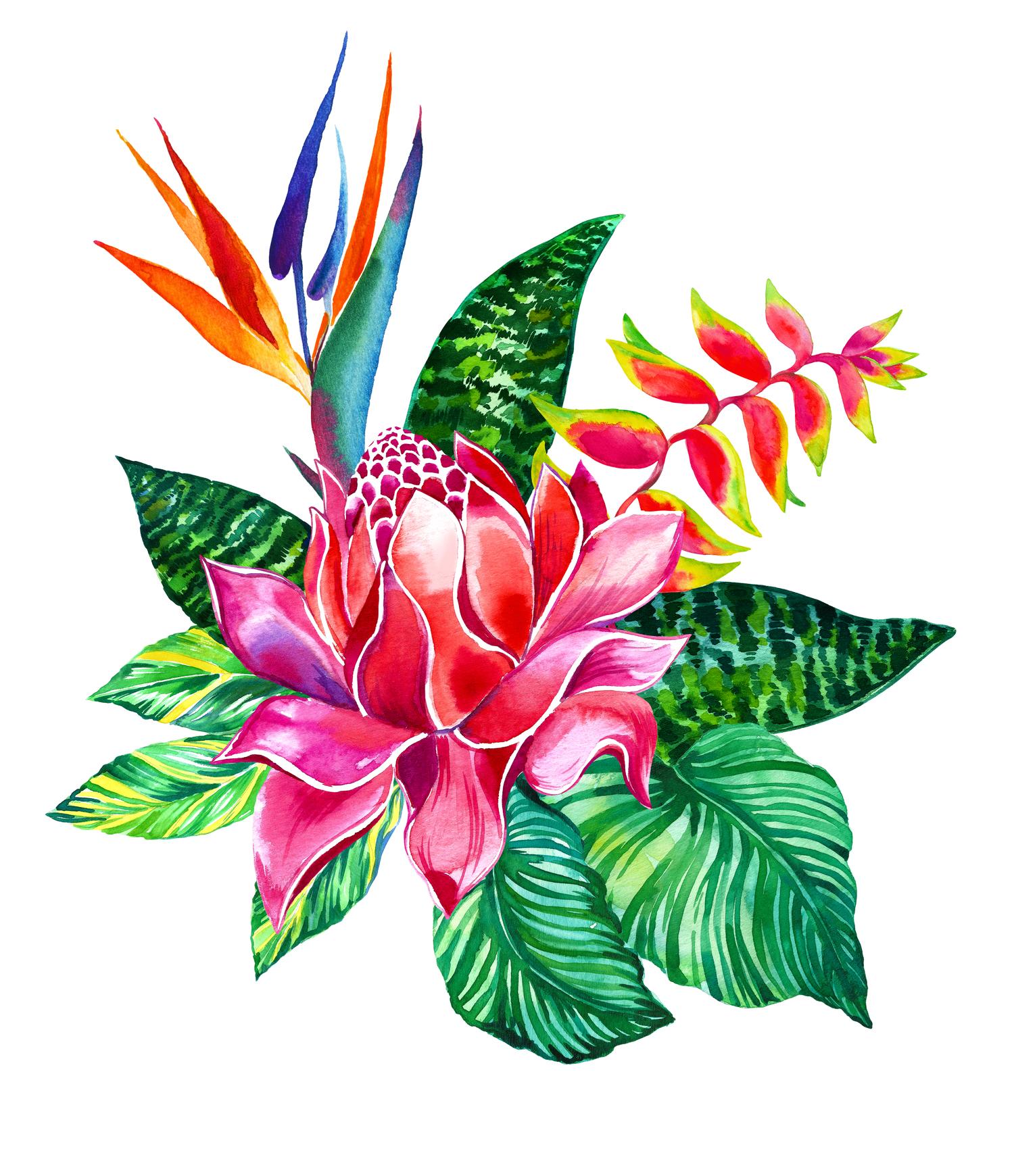 одно время, тропические цветы картинки нарисованые к?н