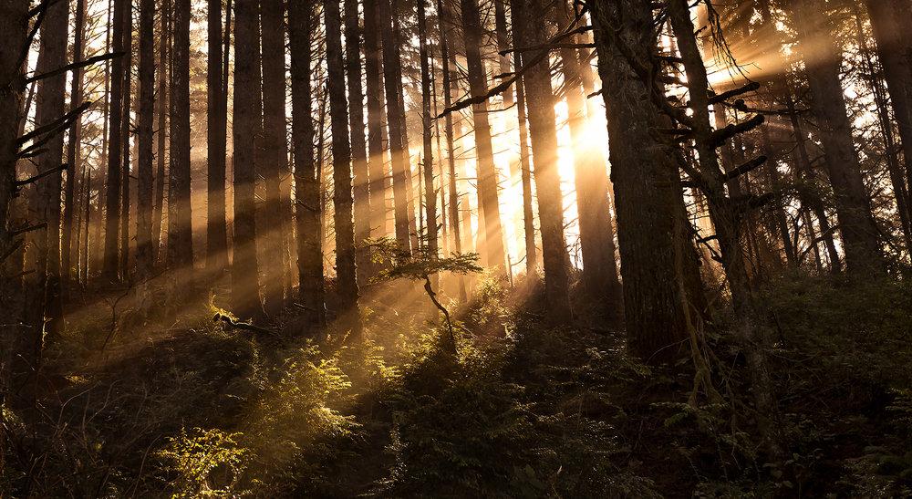 redwoods2 copy.jpg