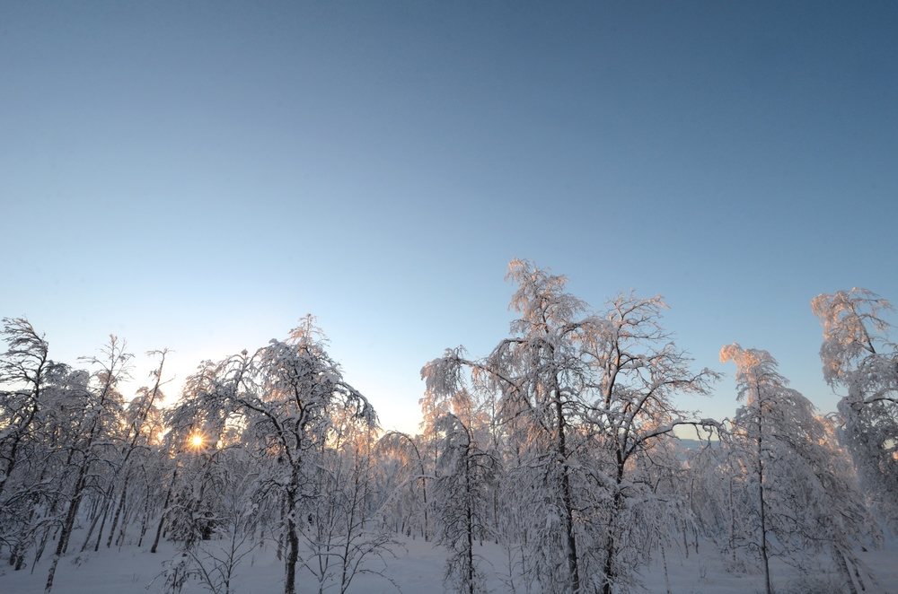 Frozen forests of Lapland