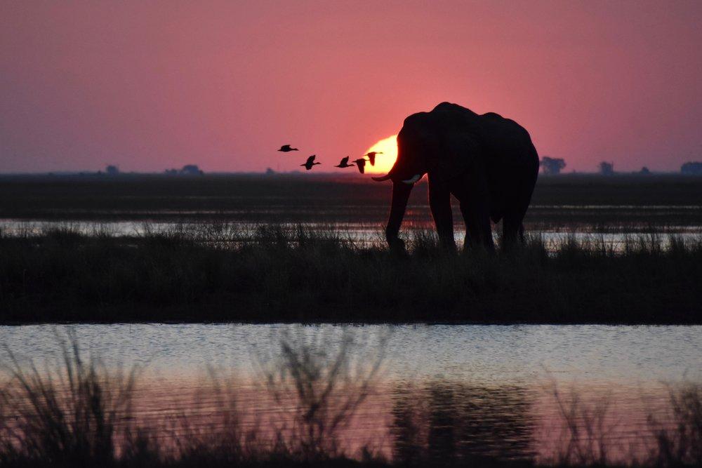 Botswana, 2017
