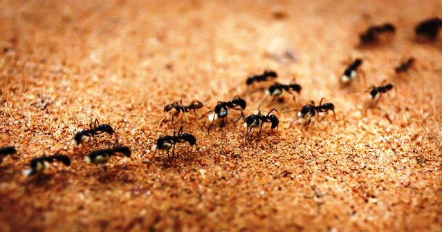 Ant Control NYC | Ant Exterminator NYC