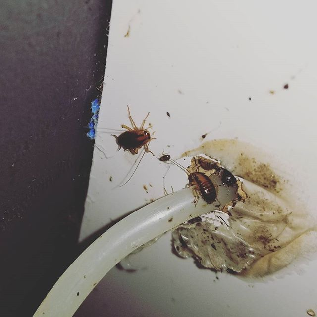 Cockroach Pest Control NYC | Roach Exterminator NYC