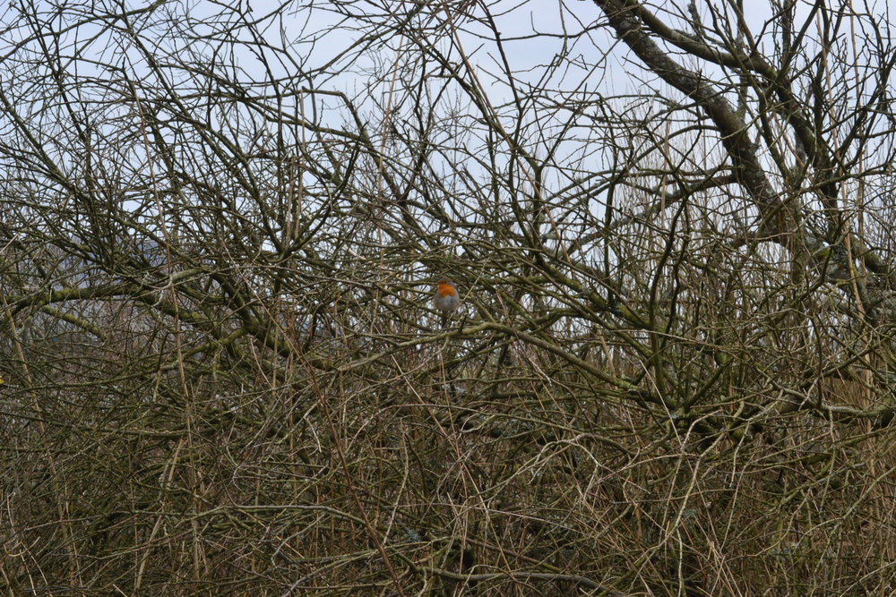 It's much easier to spot birds in early spring as they can't hide in the brush as easily