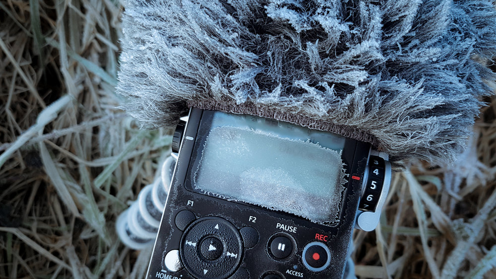 Frozen Sony PCM D100 after a night in the field