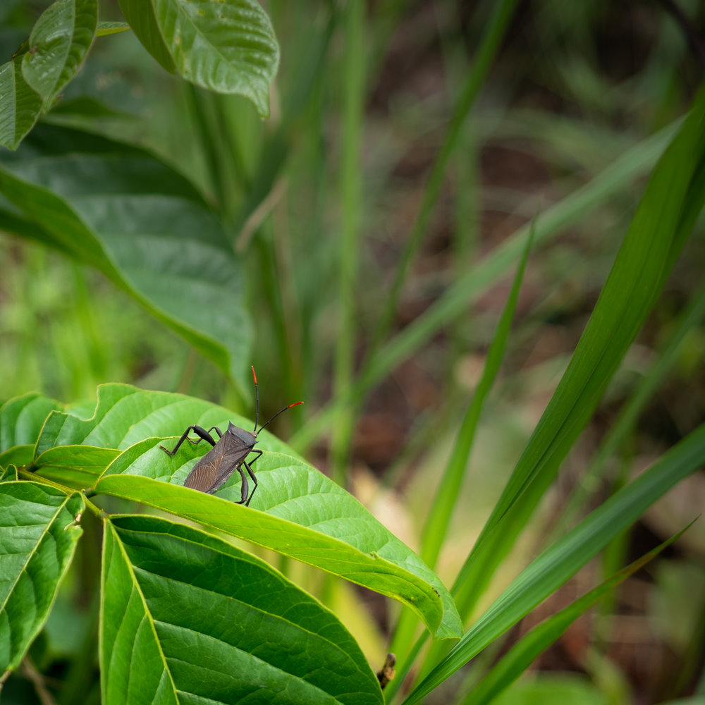 Insects in the Congo rainforest