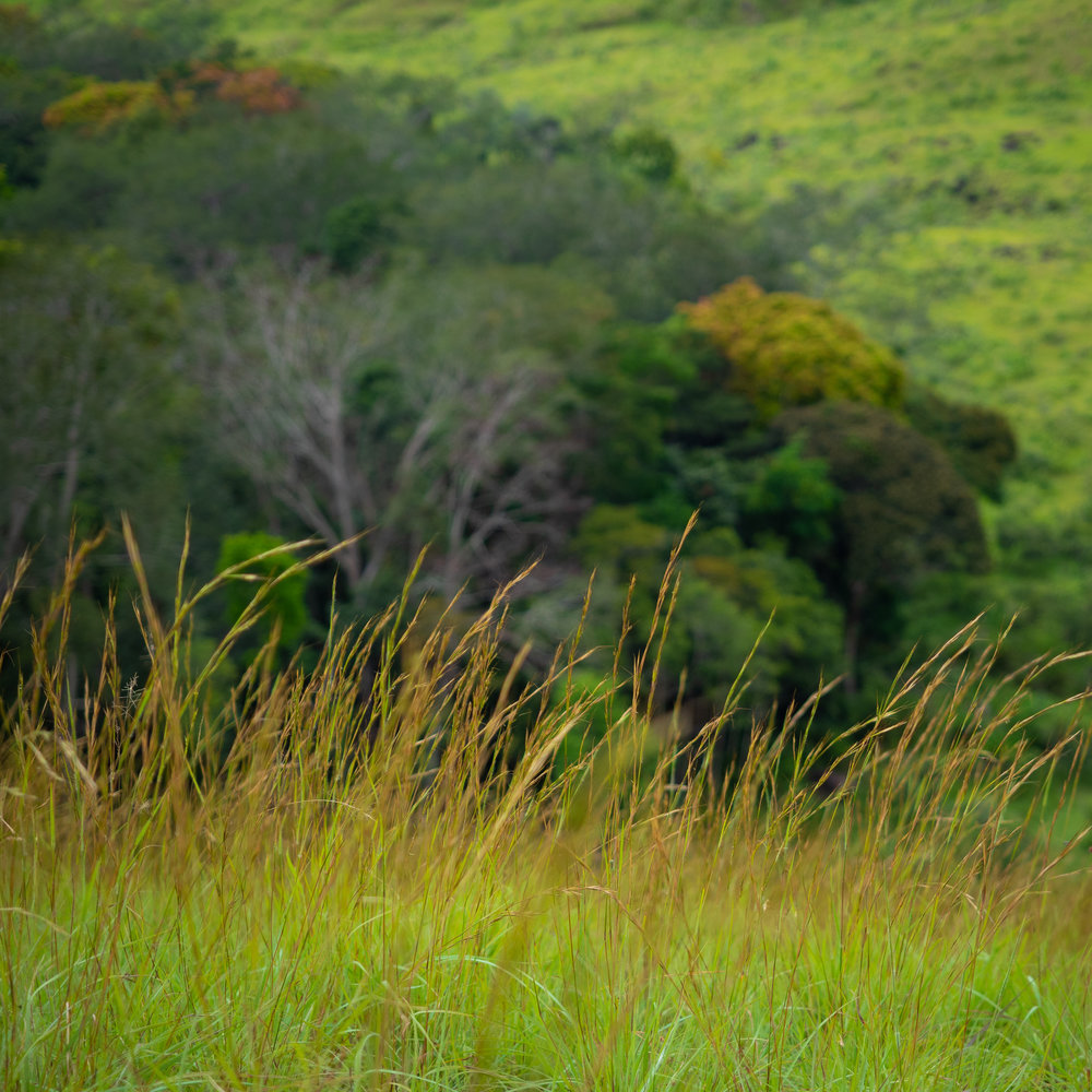 Field recording in the Western Congo forest-savanna mosaic