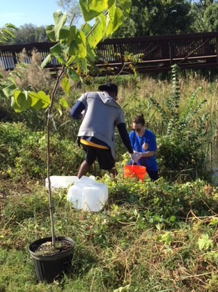 Federal City lends a hand to Prince George's County Rotary Club's tree planting day