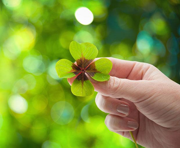 four-leaf-clover-620.jpg