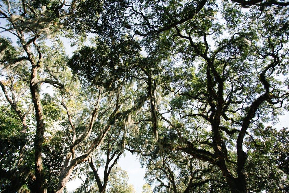 Savannah-13.jpg