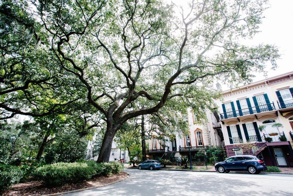 Savannah-34.jpg