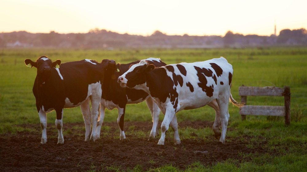 Digital agriculture forms improve animal health