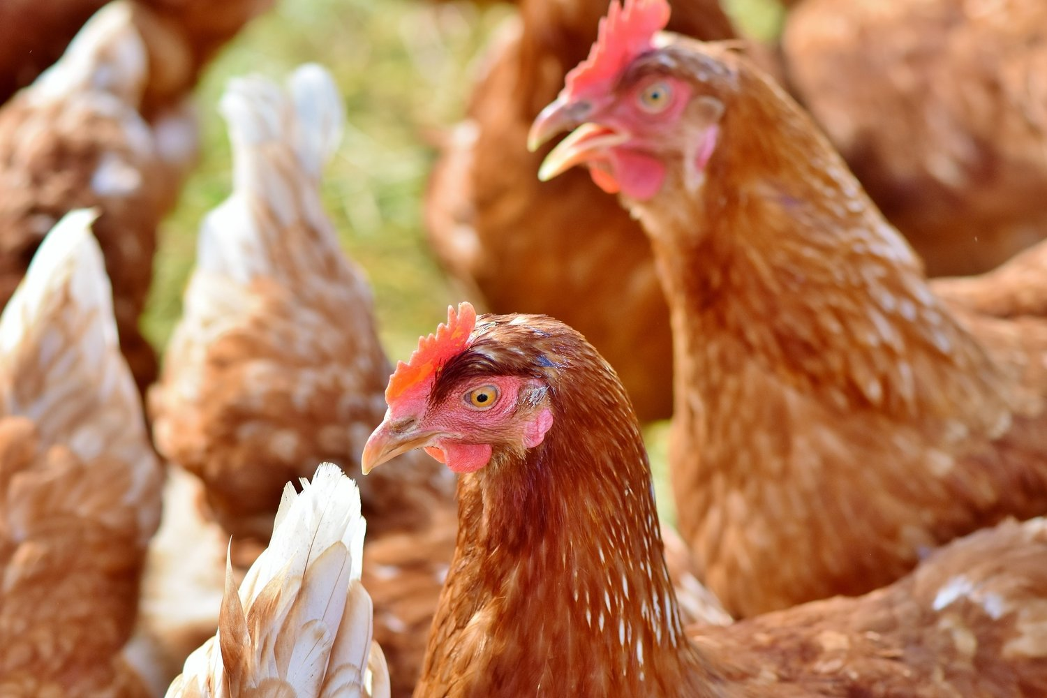 How Mobile Agriculture Forms Improve Communication & Animal Welfare