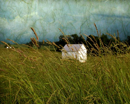 "Timothy Grass,   photograph on watercolor paper, 16"" x 20"",   $185"