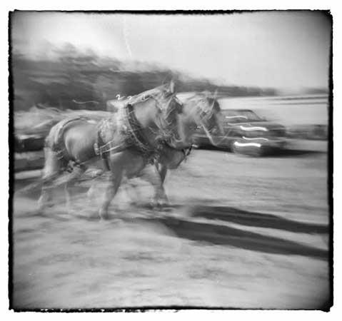"Horse Power,  silver gelatin print, 15"" x 112"" framed,  $200"
