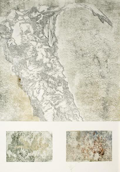 "Lichen Tree,   monotype with transfer drawing, 20¾"" x 17"" framed   $500"