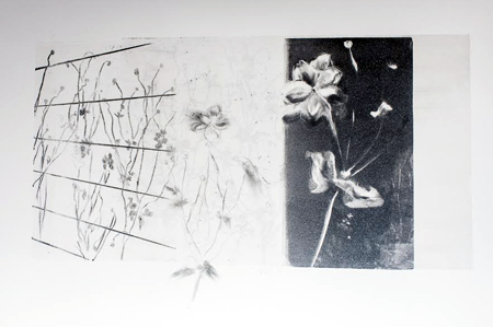 "Anemone Shadows,   monotype with graphite transfer, 11¼"" x 14""   $250"