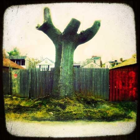 """Jesus Tree, Troy, NY , Deb Hickey, phototransfer on wood, 24"""" x 24"""", $750"""