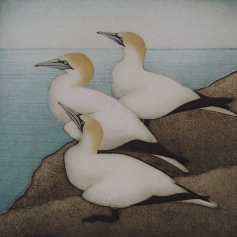 "Three Gannets , collagraph on paper, 17"" x 14 3/4"" sheet size, $300"