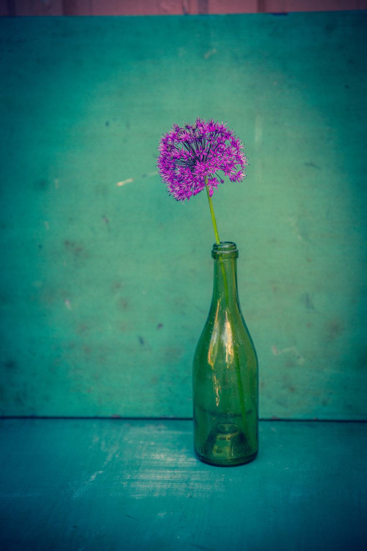 """Allium in Green Bottle ,archival inkjet print on paper,archival inkjet print on paper, 30"""" x 20"""", $350"""