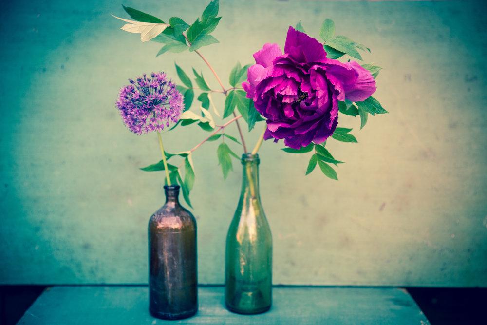 "Allium/Peony in Two Bottles , archival inkjet print on paper, 20"" x 30"", $350"