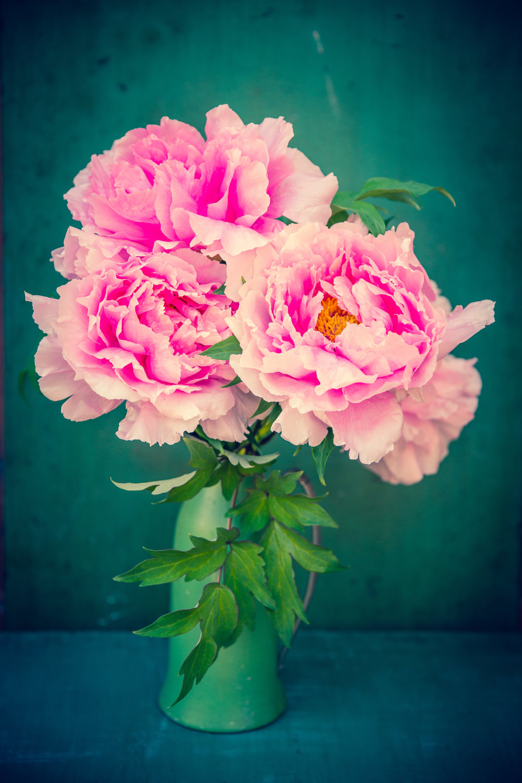 "Three Pink Peonies ,archival inkjet print on paper, 30"" x 20"", $350"