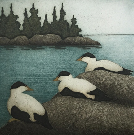 "Three Eiders  (21/40), collagraph on paper, 13 1/4"" x 13"" sheet size, $250"