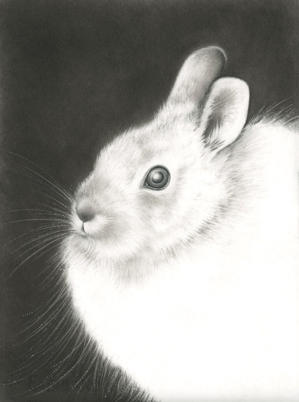 """Amy Ross ,  Jade Rabbit , graphite and charcoal on paper, 17"""" x 13"""" framed, $850"""