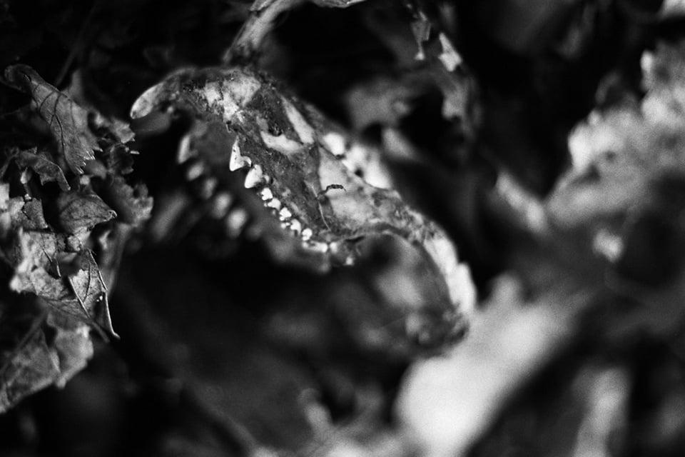 RaccoonSkull.jpg