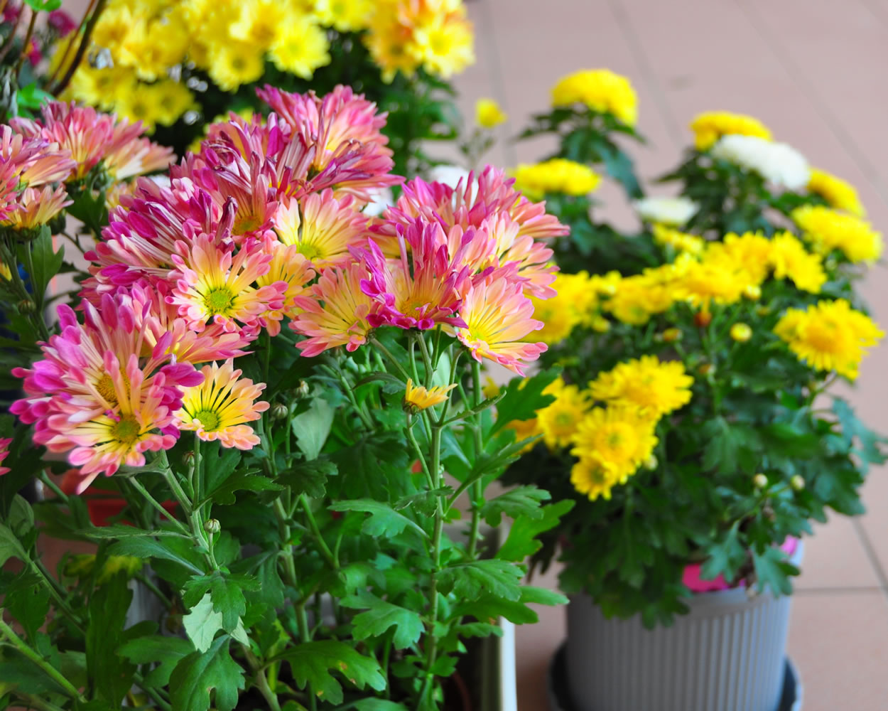 Abusing out-of-focus as an effect on flowers. Hehehe.