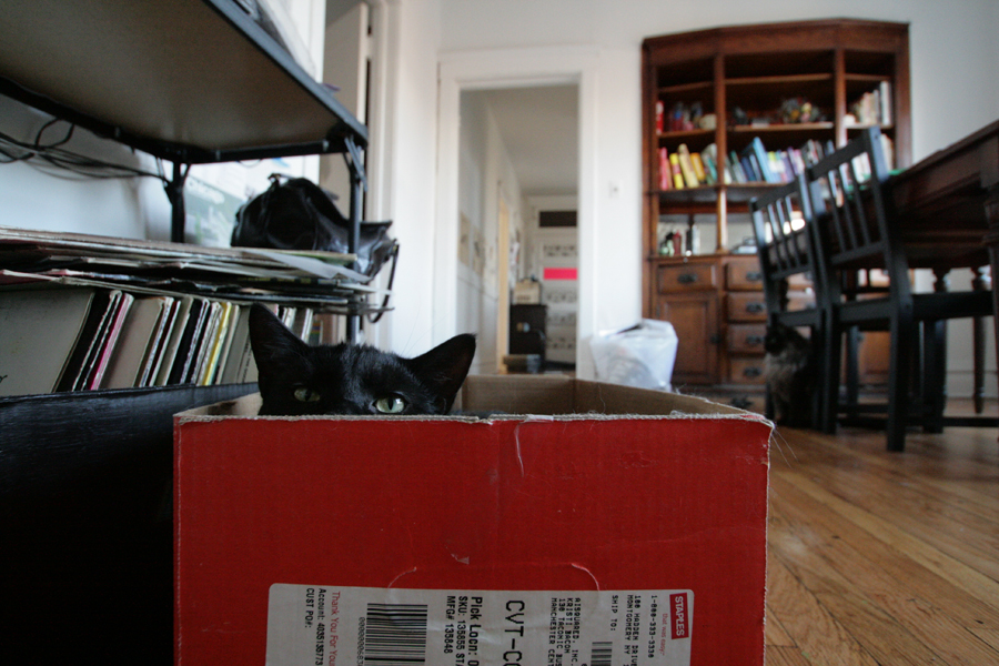 cat peeking out of cardboard box