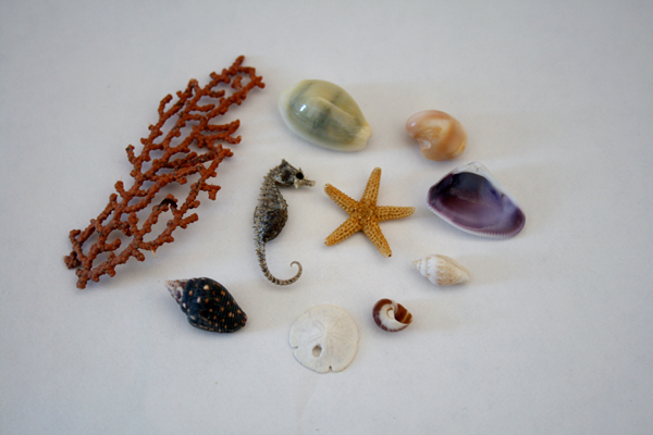 tiny mini baby sea specimen collection shells sanddollar seahorse starfish