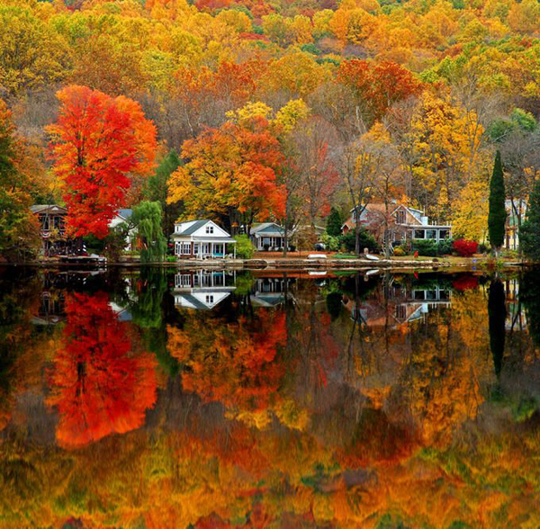 autumn fall trees on lake