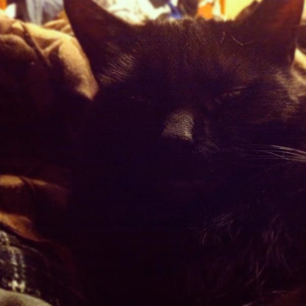 nathan, black cat