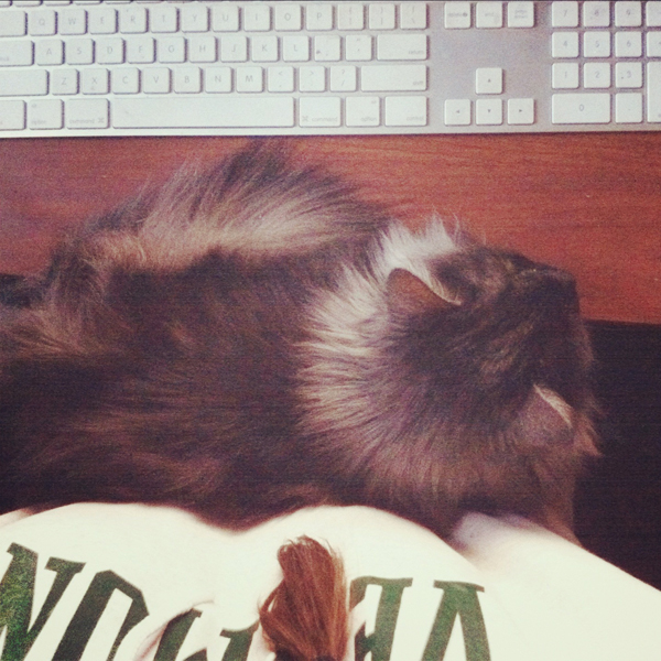 skye, computer lap cat