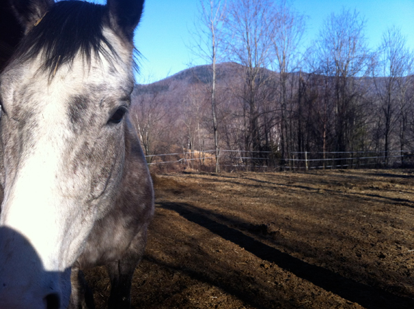 grey horse, distant mountain