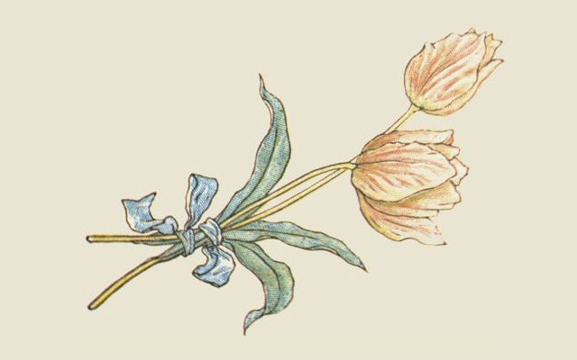 kate greenaway botanical illustrations tulips with a blue bow
