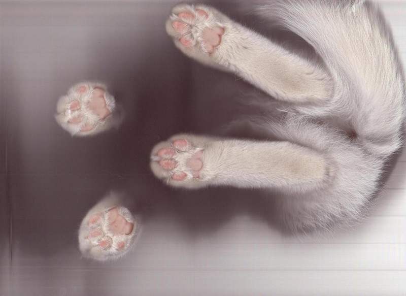 cat scan paws