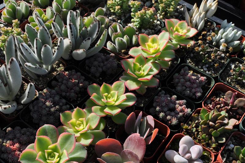 etsy succulents