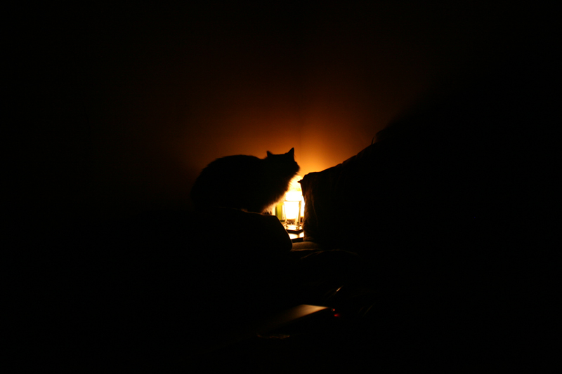 cat silhouette glow in the night