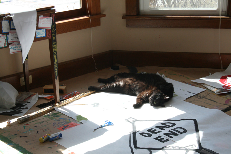 cat lounging in the sun