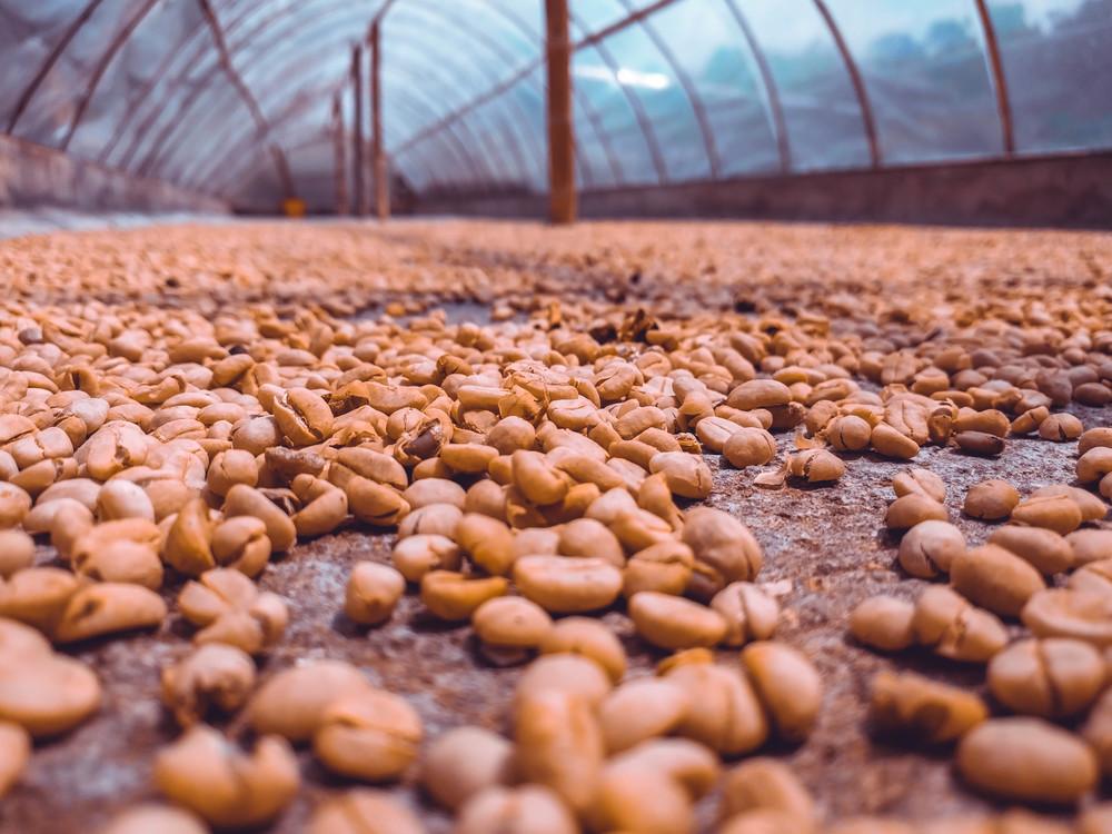 Salento- beans.jpg