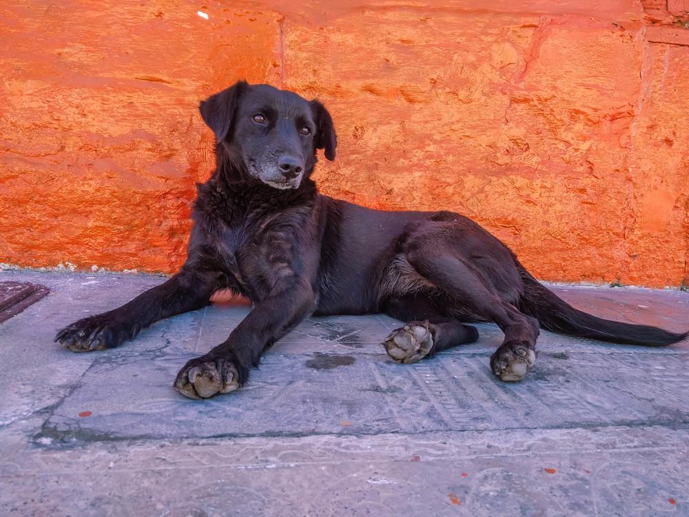 Salento- puppy.jpg
