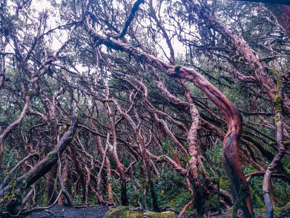 Cuenca- caja fairy forest.jpg