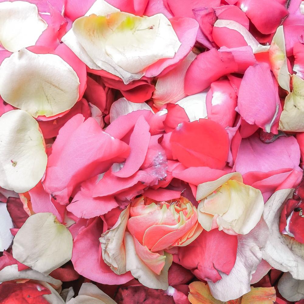 Cuenca- flower petals.jpg