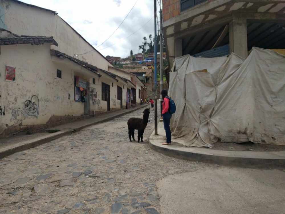 Meeting an alpaca on the street in Cusco.